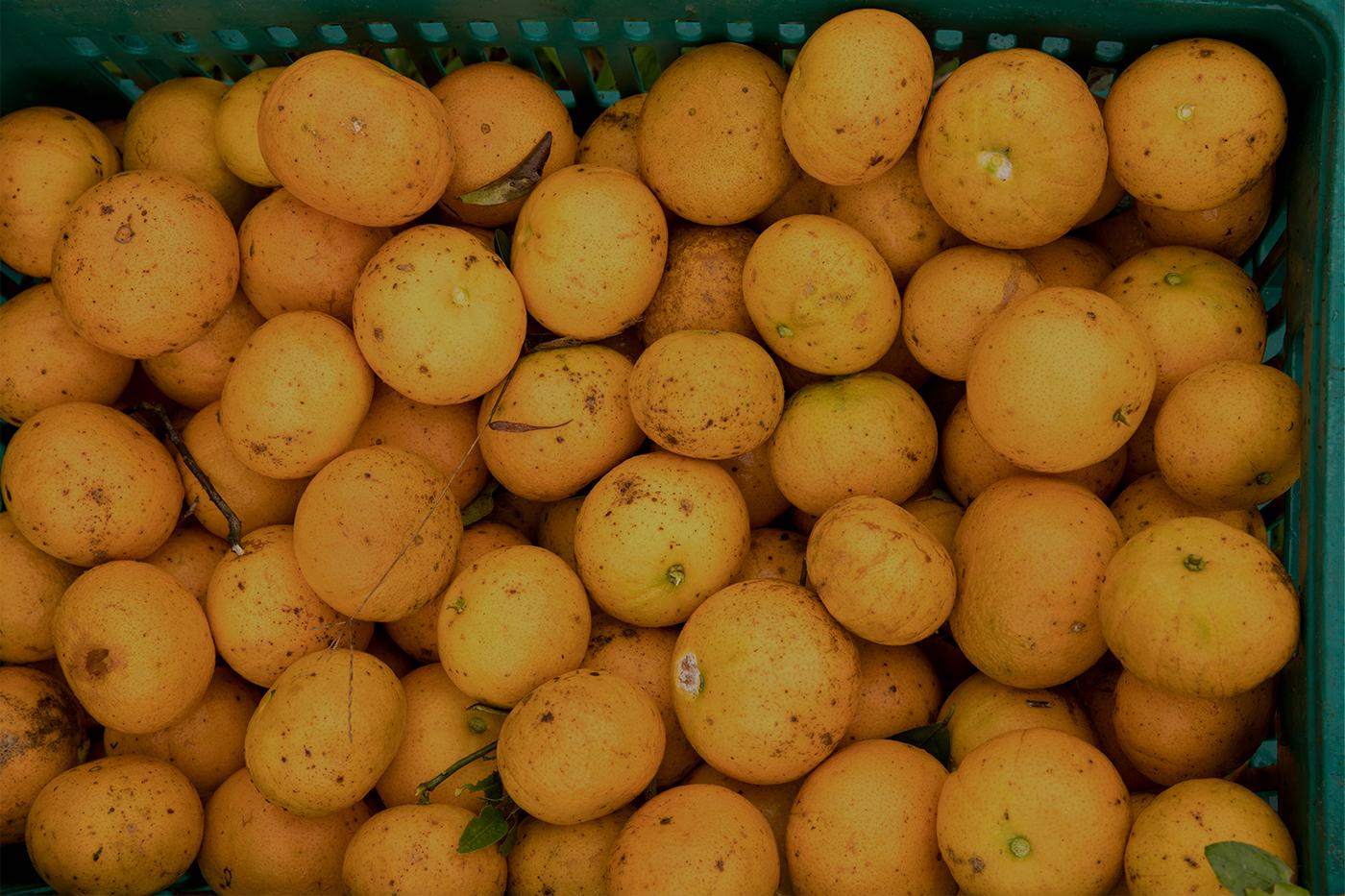 oranges-dark